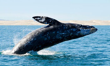 Whale Watching and Wildlife